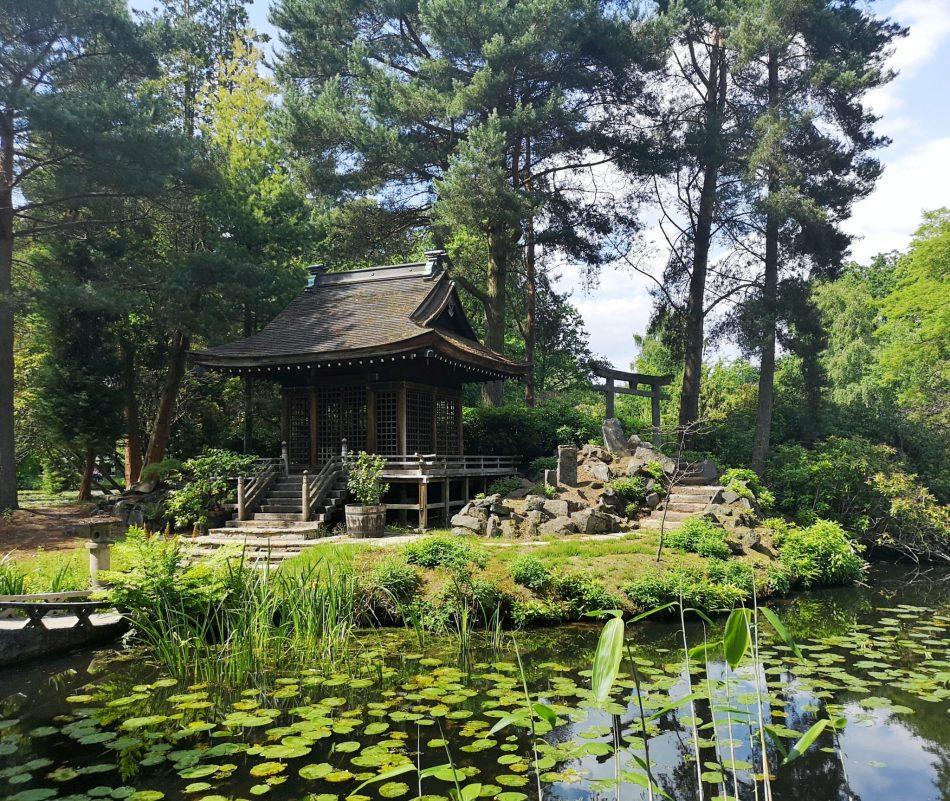 japoński ogród w Tatton Park