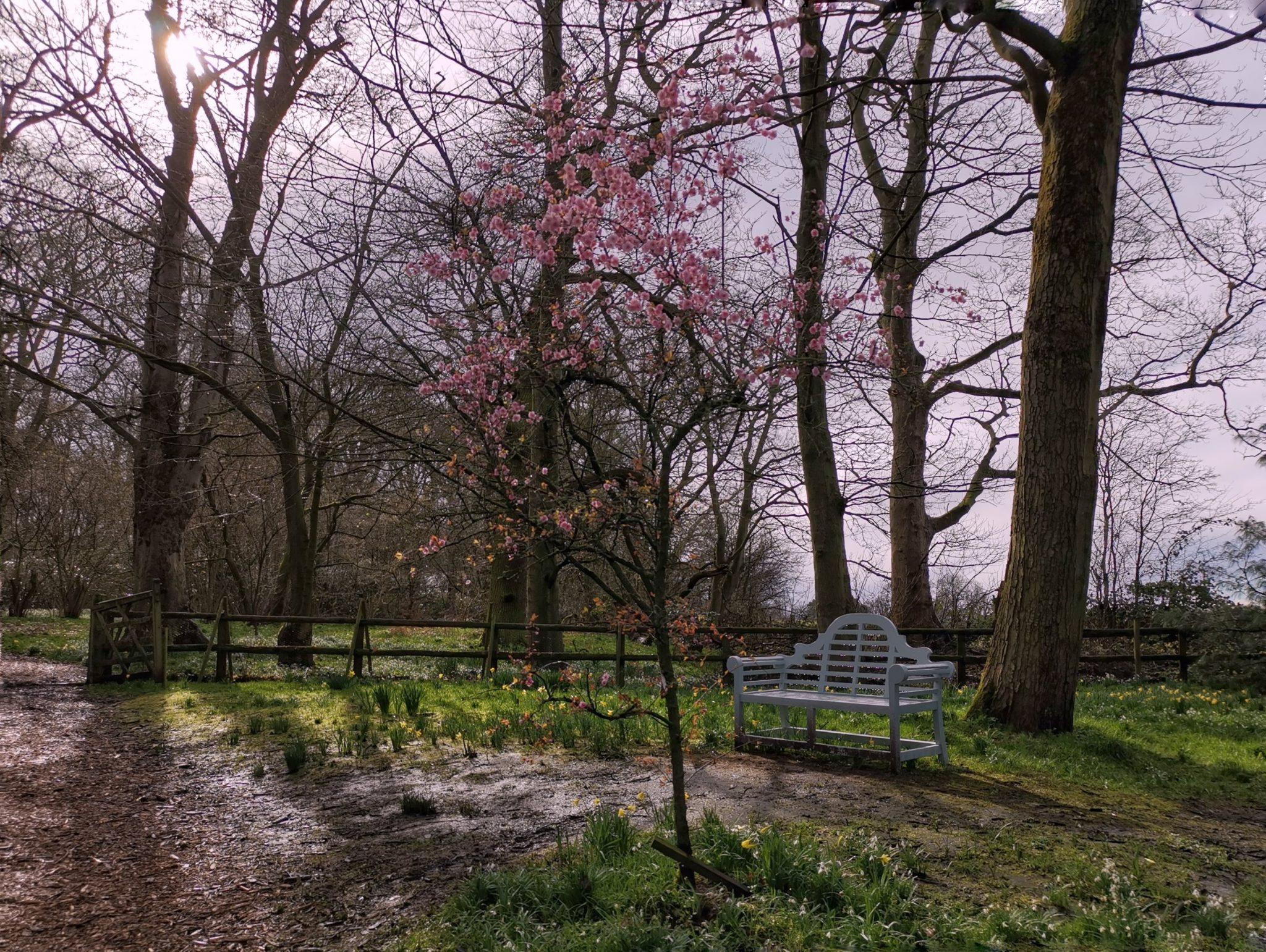 urokliwe miajsca w ogrodach Cheshire