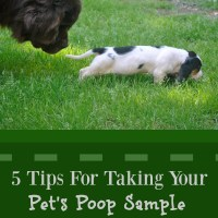 5 Tips For Taking Your Pet's Poop Sample To The Vet