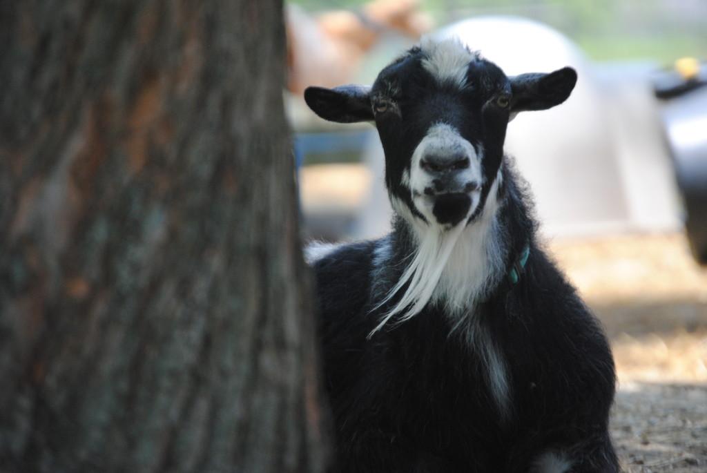Frozen Goat Milk Dog Treats