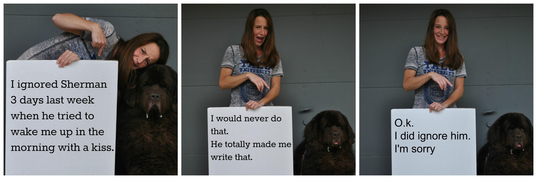 Human Shaming! Where The Dogs Shame Us! #HumanShaming - My Brown Newfies