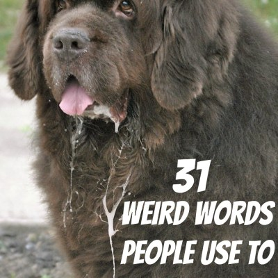 31 Different Terms For Dog Drool.