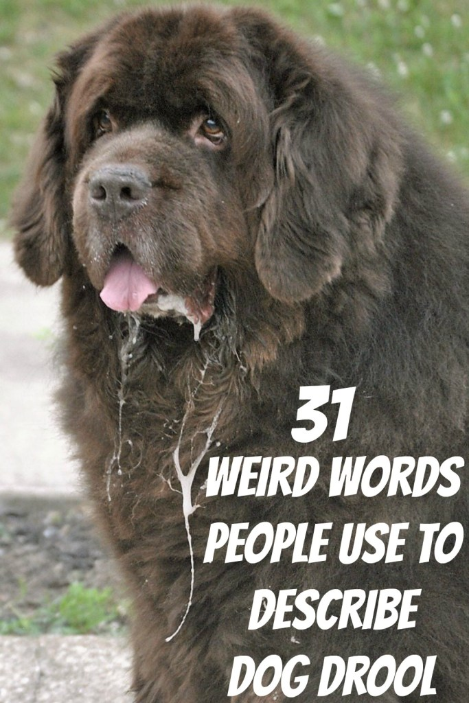 People that have dogs that drool like the Newfoundland havesome really weird names that they use to describe drool