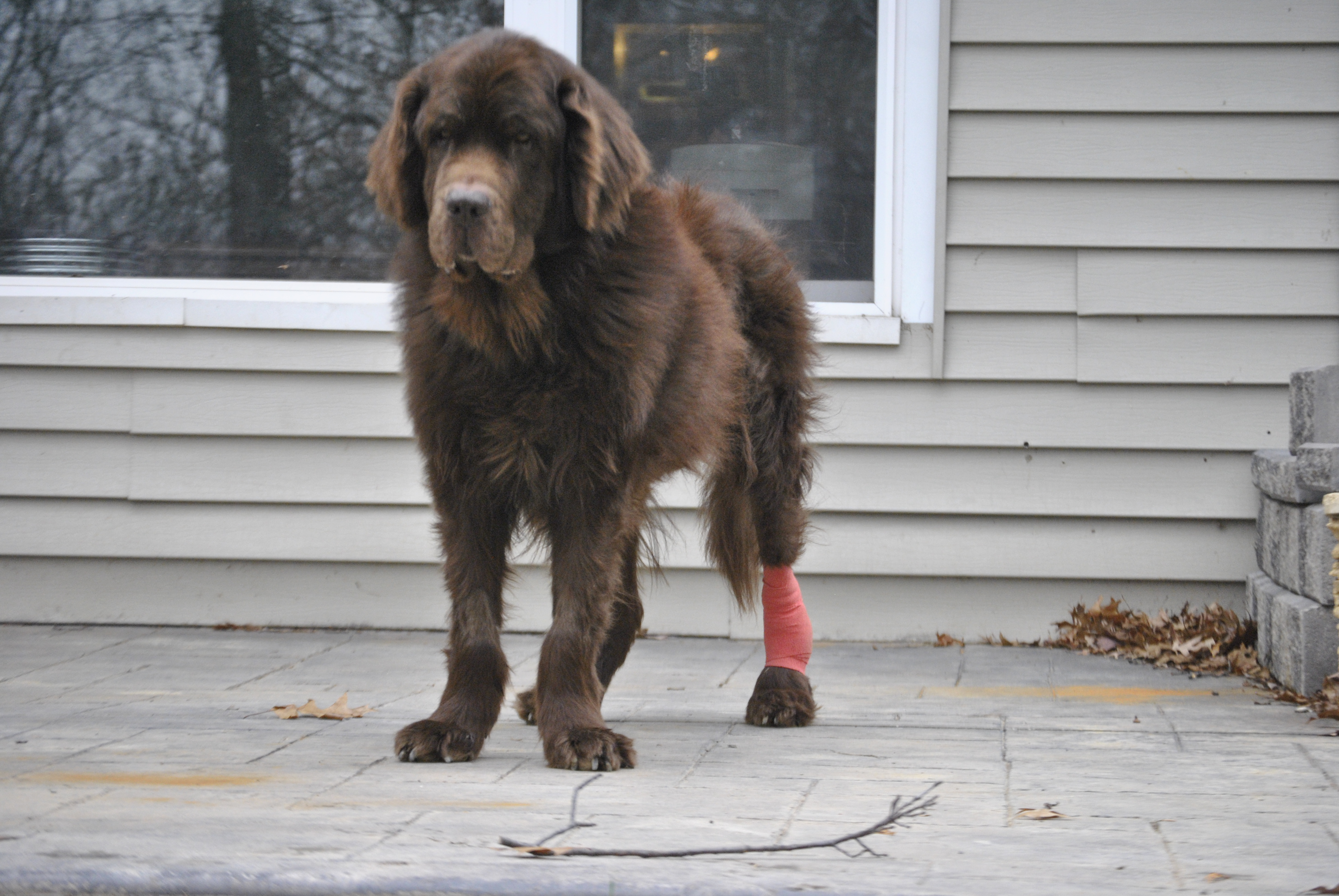 Stages Of Pressure Sores And Wound Healing In Dogs - My