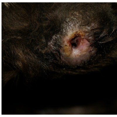 Stages Of Pressure Sores And Wound Healing In Dogs