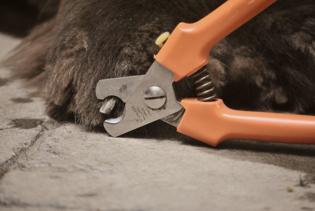 5 Easy Ways To Stop A Dog\'s Bleeding Nail - My Brown Newfies