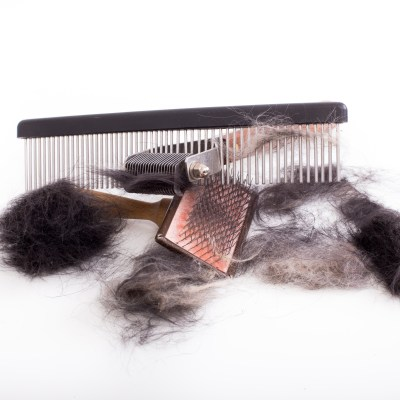 Grooming Tools For The Newfoundland Dog