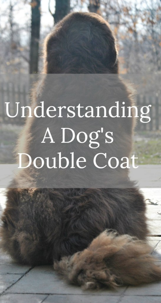 Understanding A Dog's Double Coat