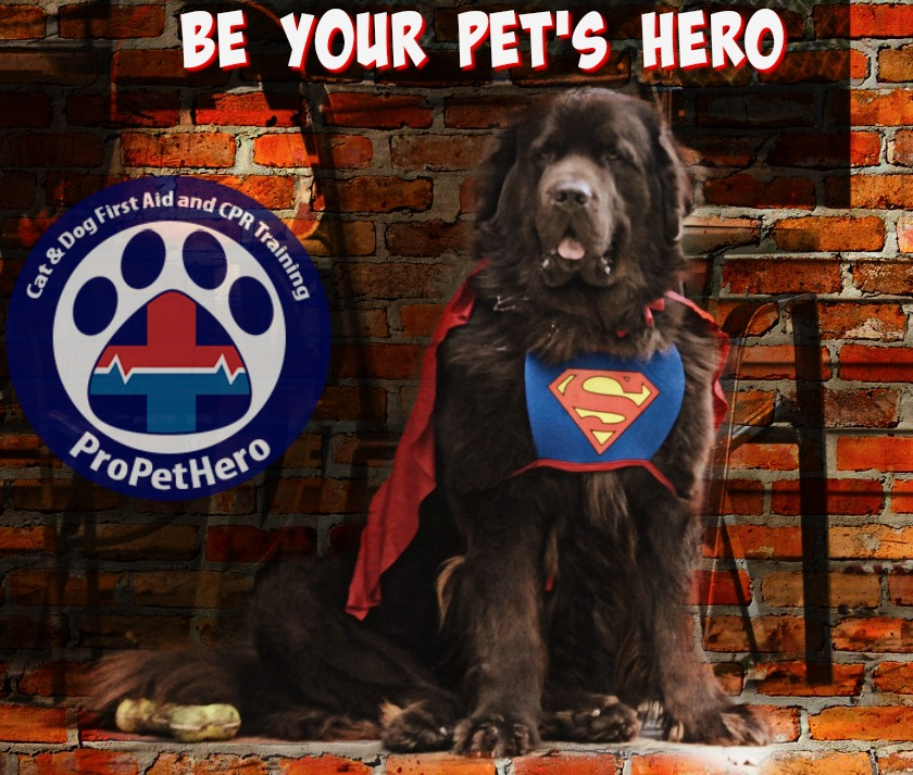 Be Your Pet's Hero. Cat & Dog CPR and first aid training
