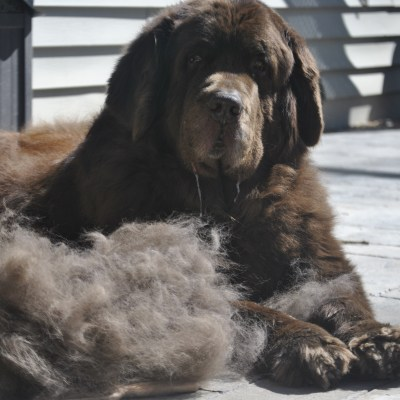 5 Ways To Get Your Dog's Coat Ready For Spring Now