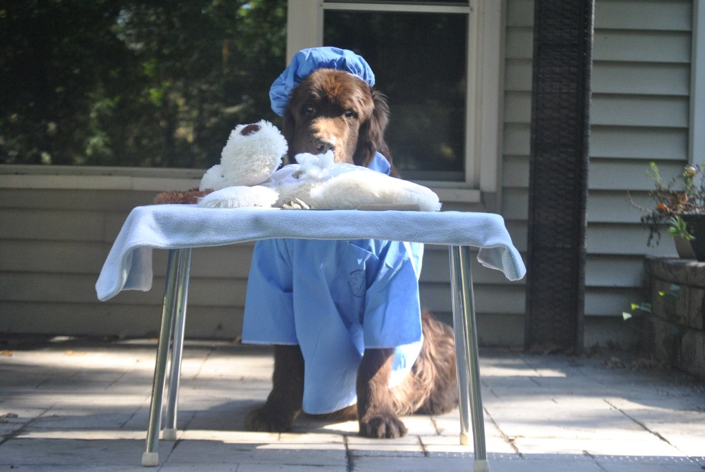 dog dressed as surgeon for halloween