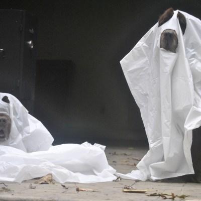Newfie Ghosts Gone Wrong. Blooper Reel!