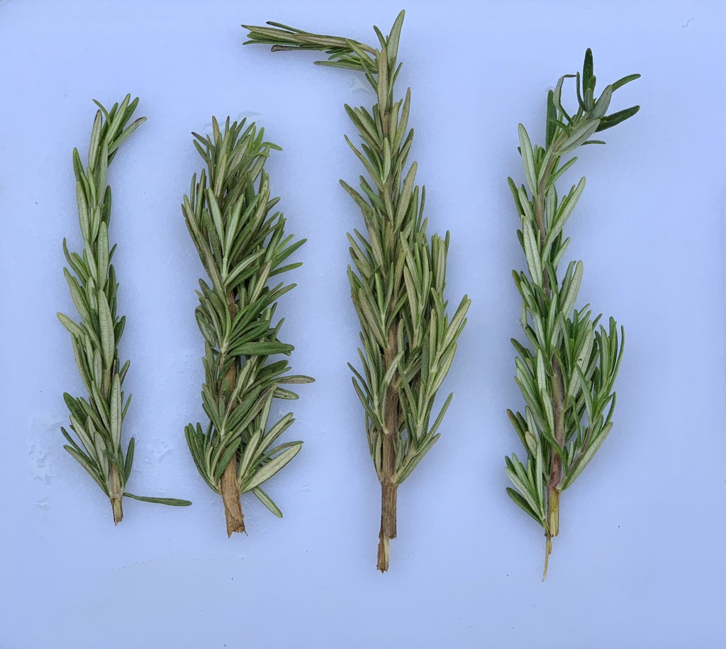 rosemary is a good way to keep mosquitos away
