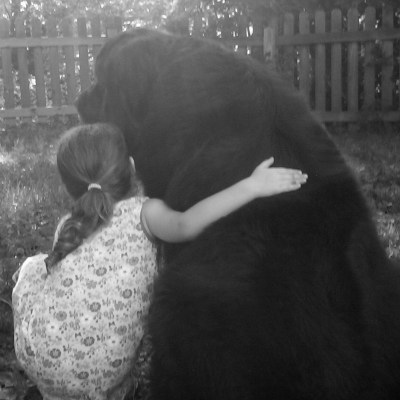 newfoundland dog sitting with little girl