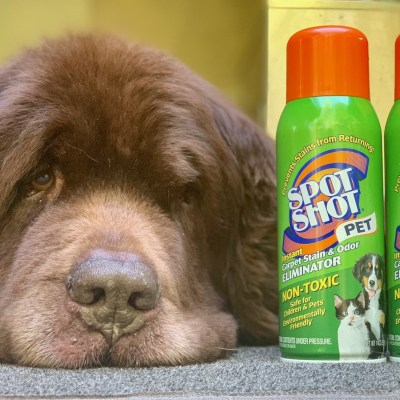 Cleaning Up The Dog Stains Of Summer