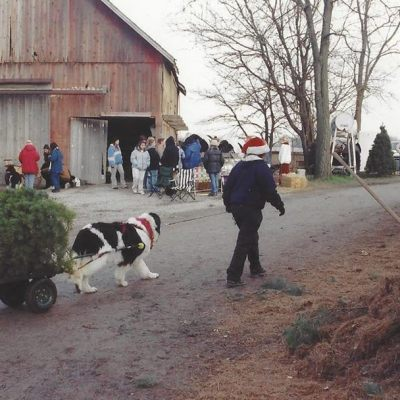 2019 Newfoundland Dog Christmas Tree Pull List