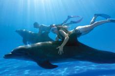 돌고래와 함께 수영하기