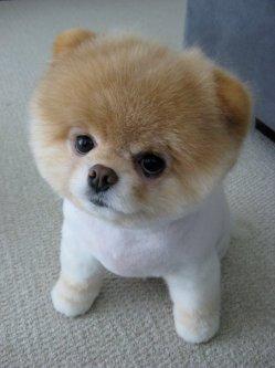 im a teddy bear