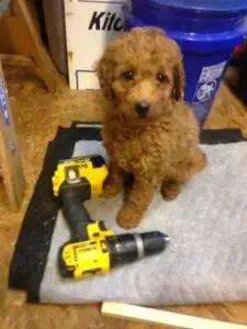 Blog 2 Sophie 2 baby tool