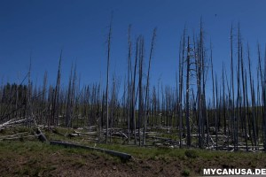 Yellowstone Wildfire