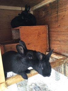 Cold-Weather Rabbit Hutch Plans | My Casual Homestead on football rabbits, cold war rabbits, pets rabbits, six rabbits, green rabbits, racing rabbits, black rabbits, babies rabbits,