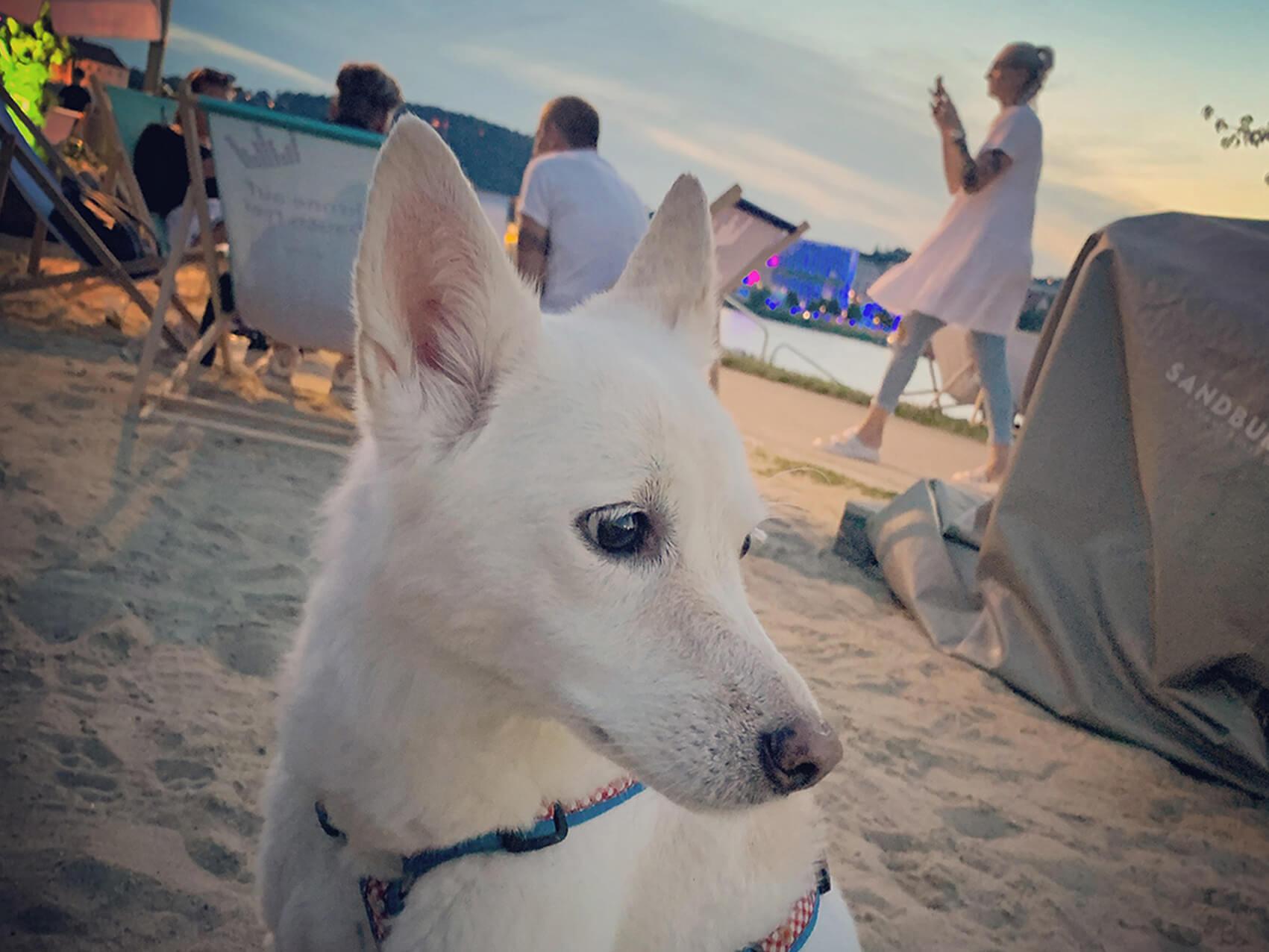Linz mit Hund