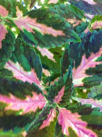 Bright Coral Mosaic 2