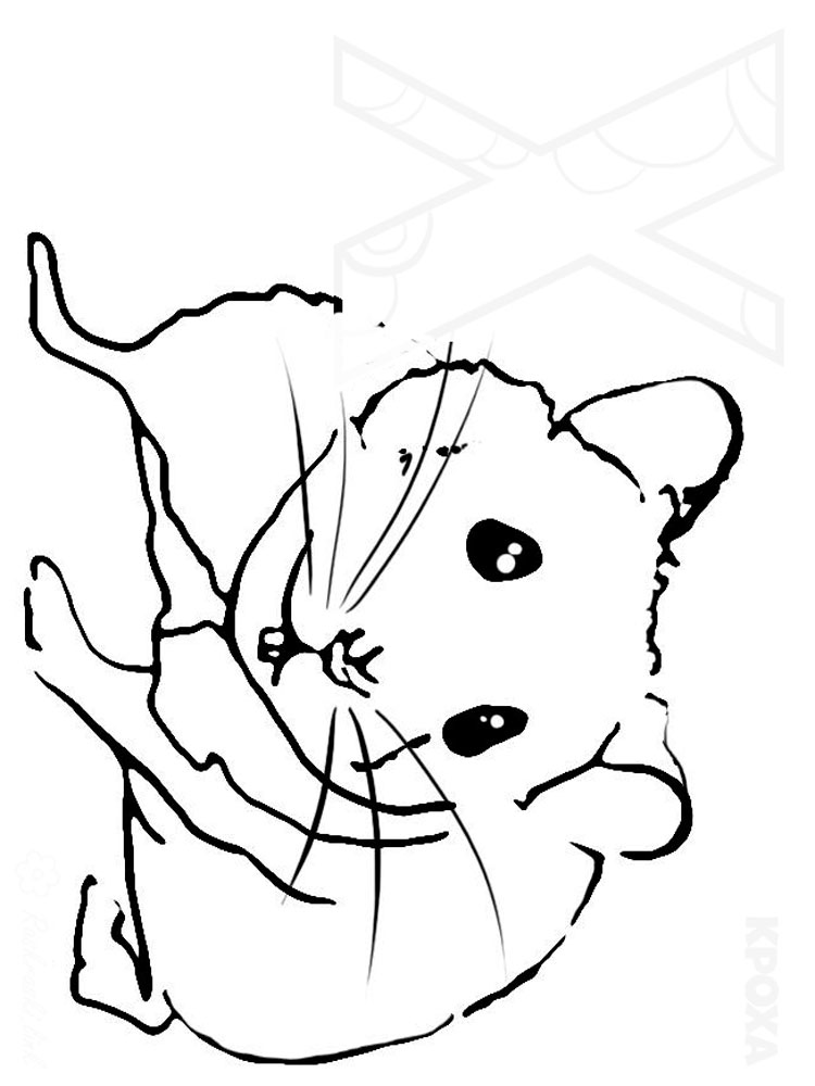 Hamster Coloring Pages Download And Print Hamster Coloring Pages