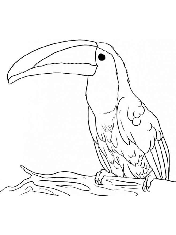 toucan coloring pages. download and print toucan coloring