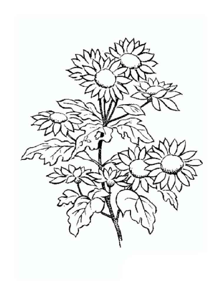 Daisy Flower Coloring Pages Download And Print Daisy