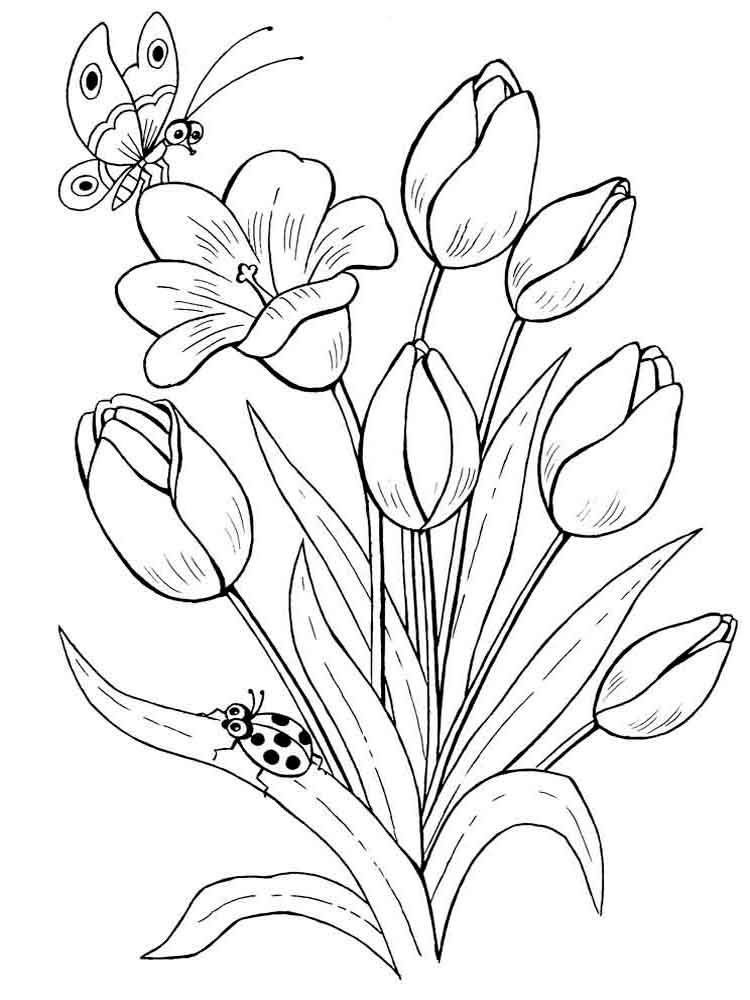 Tulip coloring pages. Download and print Tulip coloring pages | colouring pages tulip flowers