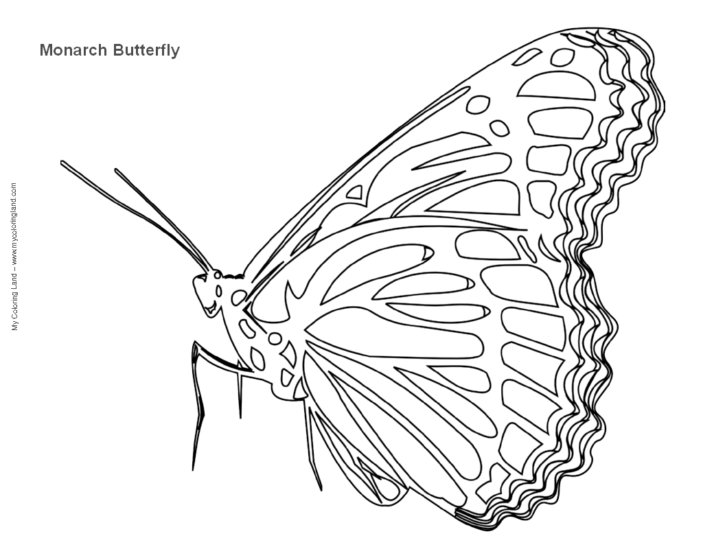 Butterfly My Coloring Land