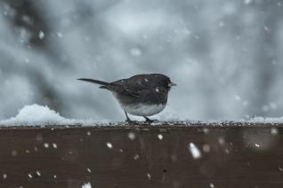 bird sitting on a snowy ledge