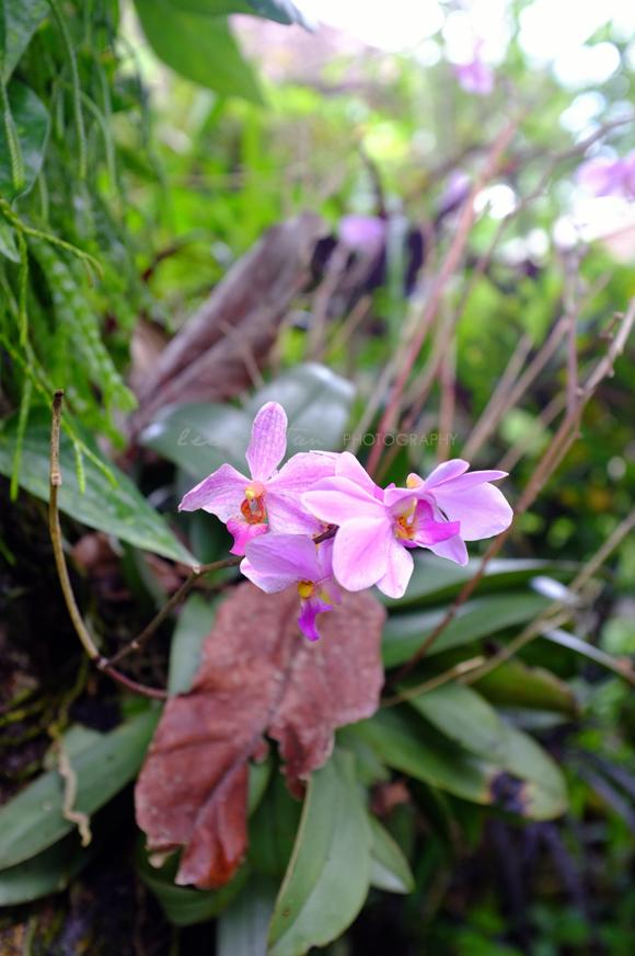 wild-orchids