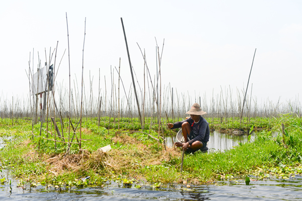 farmer-on-inle-lake