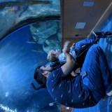 00000IMG 00000 BURST20181003114113403 COVER - El Oceanogràfic de Valencia, el acuario más grande de Europa