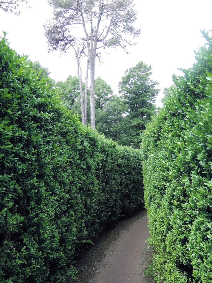 Lost inside Villa Pisani Maze