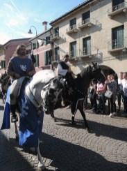Horses, Palio di Noale