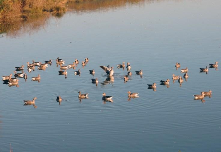 Isola della Cona, Birdwatching in Friuli