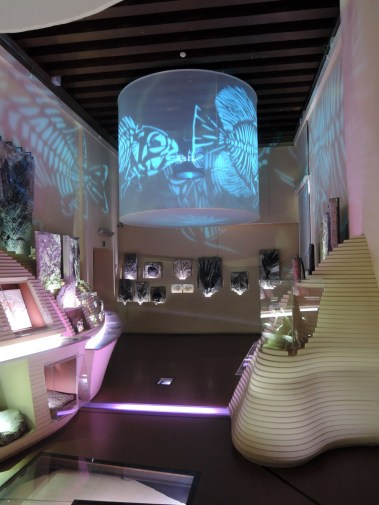 Natural History Museum of Venice