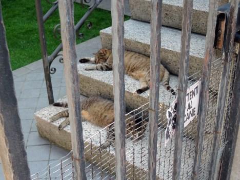 Sprawled cats