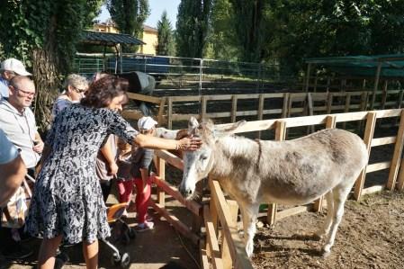Cuddling donkeys, Rice Fair in Isola della Scala