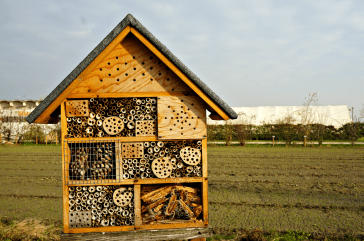 Insects House