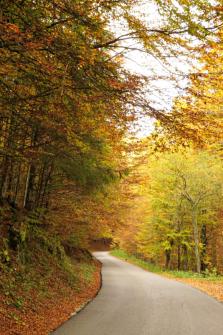 Cansiglio forest