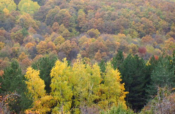 A fabulous Sunday autumn picnic   My Cosy Retreat