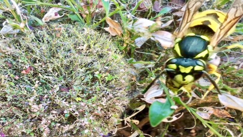 German Wasps 2 12675 mycraftsandgarden