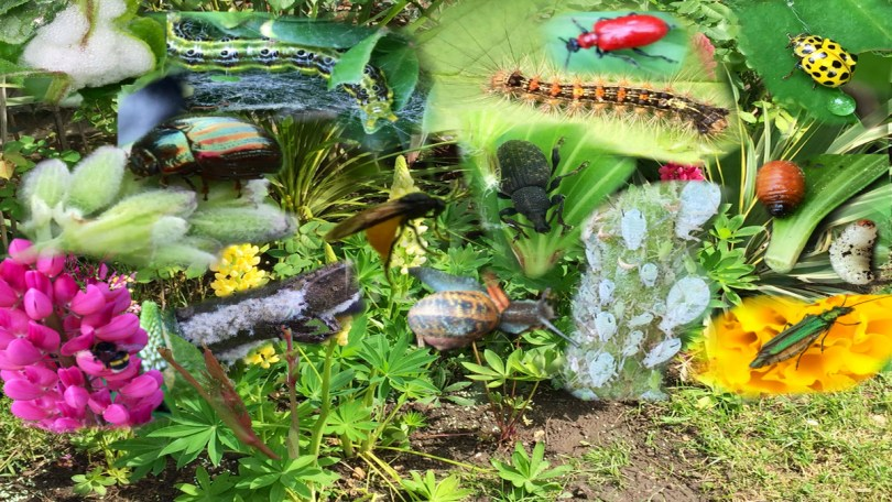 Garden Insects 12675 mycraftsandgarden