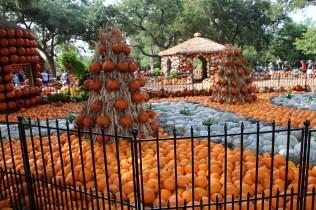 Arboretum pumpkins