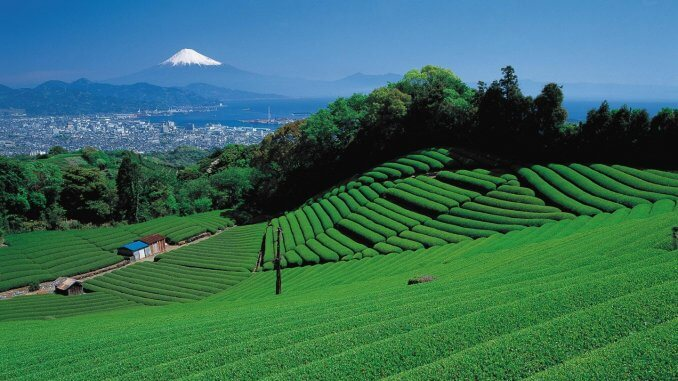 La préfecture de Shizuoka - MycrayJapan