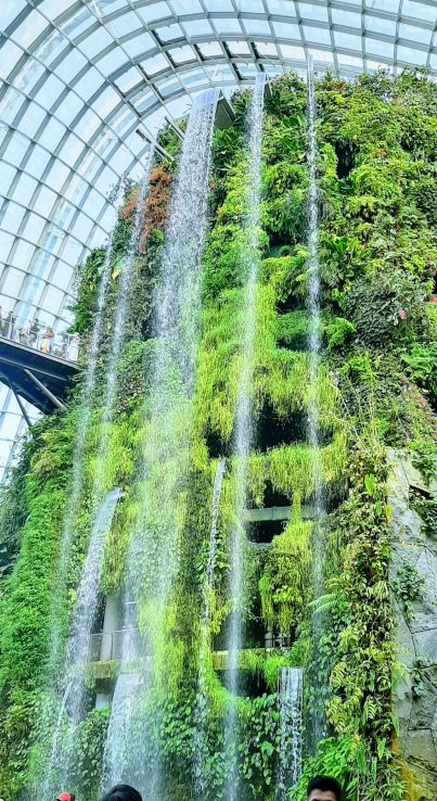 Forest Dome water fall